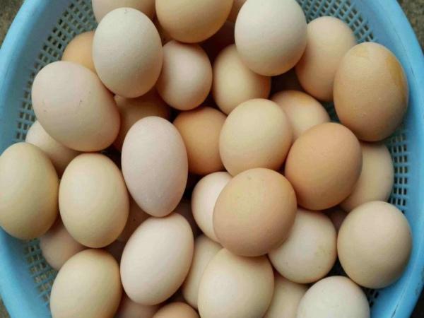 鸡蛋兽药残留检测仪最新推出