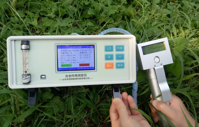 光合作用测定仪:研究数据为培育竹子提供指导依据
