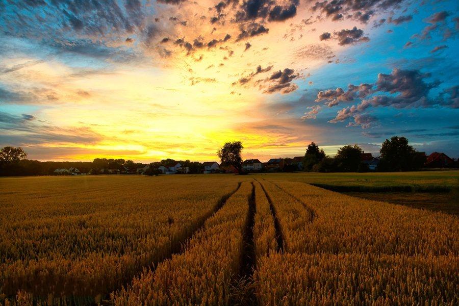 解读农用地标准风险管控